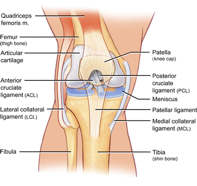 Diagram of Knee Joint showing LCL