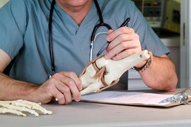Knee surgeon