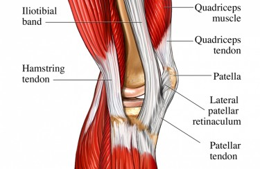 Hamstring Knee Tendon Pain