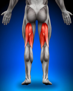 hamstring-knee